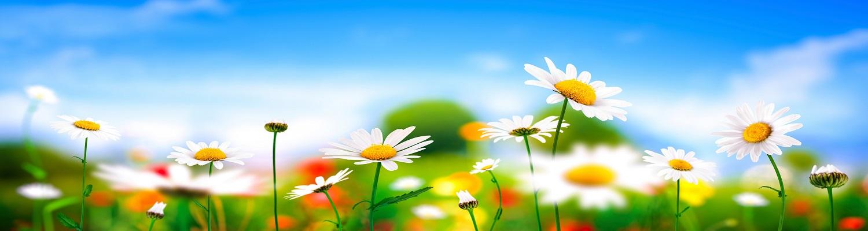 immagine con  fiori
